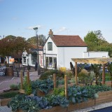 Town centre food gardens in Letchworth, UK